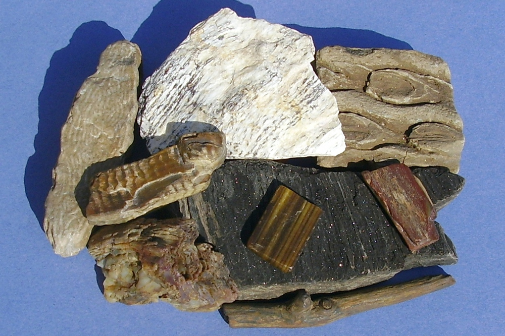 Rocks and Fossil Display
